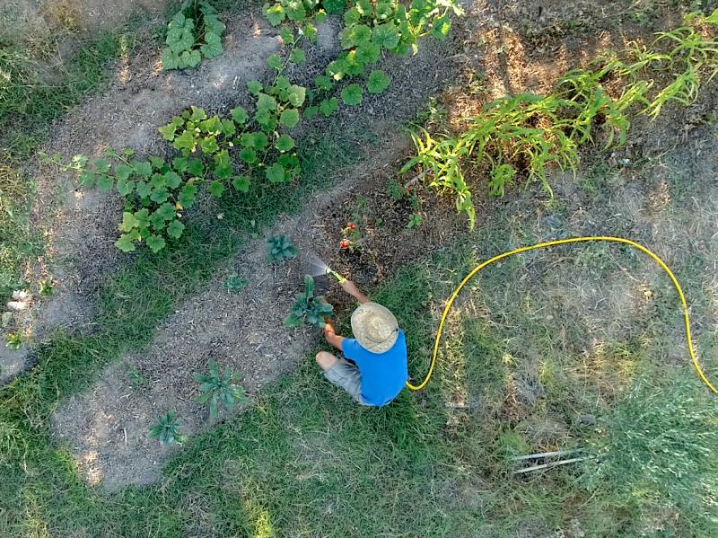 watering garden beds permaculture regenerative