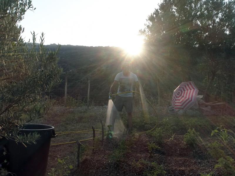 permaculture garden regenerative watering